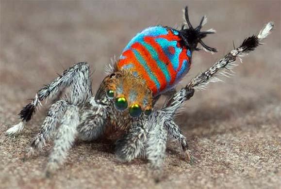 Μετά από αυτό το θέμα, θα πάψετε να φοβάστε τις αράχνες