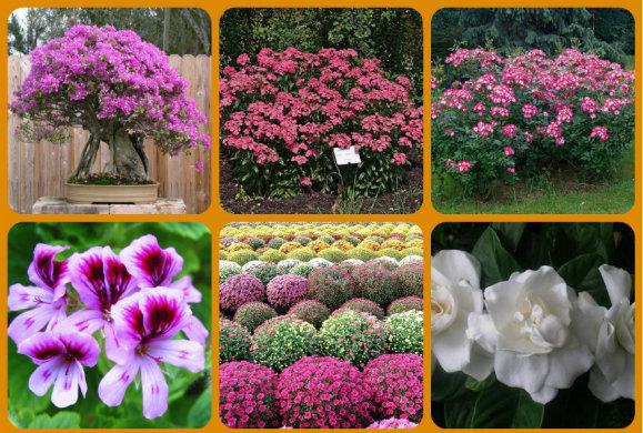 Ιδανικά λουλούδια για να στολίσουν το μπαλκόνι μας