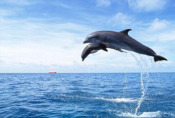 Πενθούν τα δελφίνια;