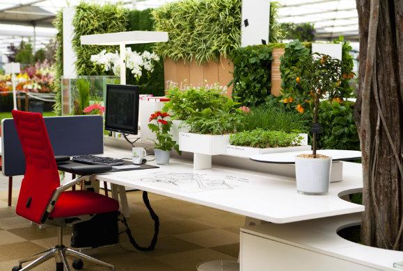 Βοηθούν τα φυτά την παραγωγικότητα μέσα στο γραφείο;