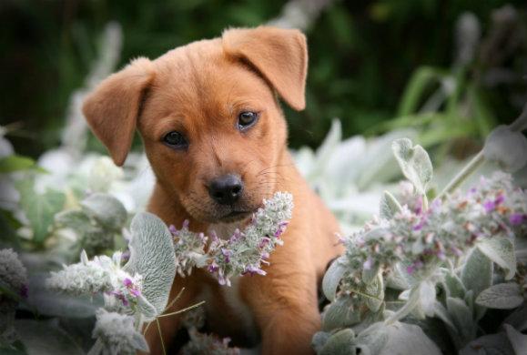 Ποιος θα ήταν ο δεκάλογος του σκύλου αν μπορούσε να μιλήσει;