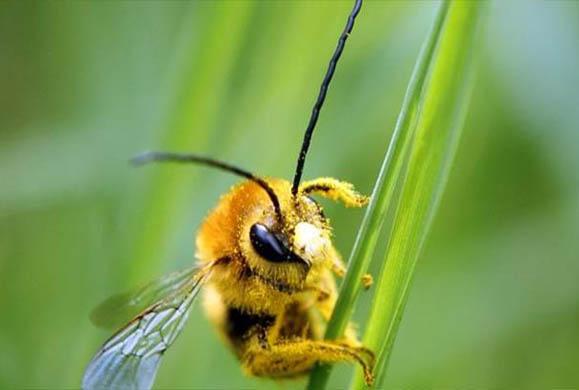 Οι μέλισσες αναγνωρίζουν ανθρώπινα πρόσωπα