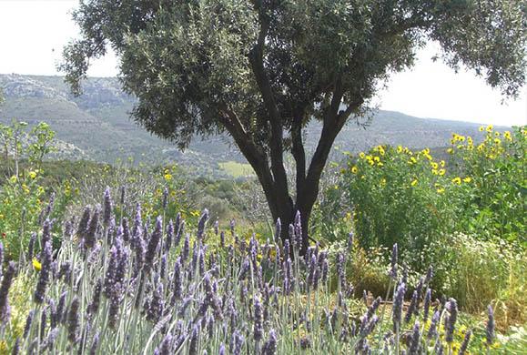 Εξοχικό: Επιλέξτε τα σωστά φυτά για έναν ανθισμένο κήπο όλο το καλοκαίρι