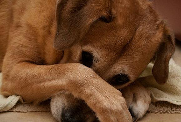 Γιατί λέμε ΟΧΙ στην τιμωρία του σκύλου μας;
