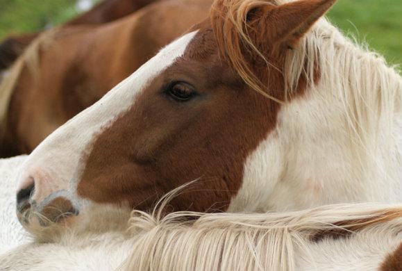 Τα άλογα στην υπηρεσία των ασθενών με Alzheimer