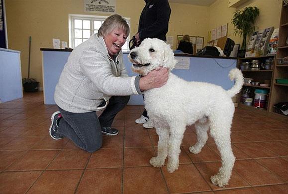 Δείτε πως η αγάπη και η φροντίδα έκαναν αυτόν τον σκύλο αγνώριστο- ΕΙΚΟΝΕΣ