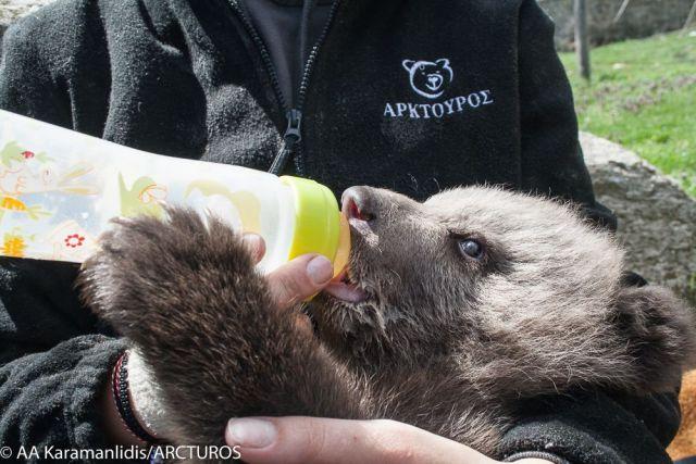 Το ορφανό νεογέννητο αρκουδάκι ο Πάτρικ του ΑΡΚΤΟΥΡΟΥ, θα έχει την υποστήριξη της  iSquare