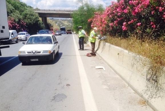 Ασυνείδητος κυνηγός  πέταξε σκυλιά στον ΒΟΑΚ Κρήτης