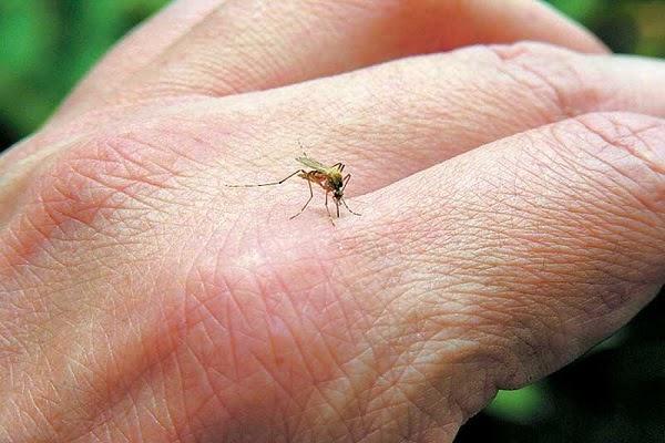 Μειώσετε γρήγορα το πρήξιμο και τη φαγούρα από τσιμπήματα κουνουπιών