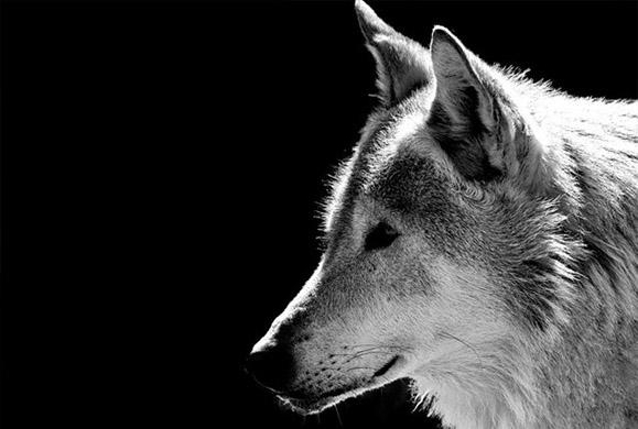 Ο άνθρωπος εξημέρωσε τον σκύλο πριν 27.000 χρόνια