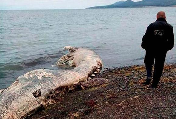 Εικόνες του μυστηριώδους πλάσματος που ξεβράστηκε σε ακτή της Ρωσίας