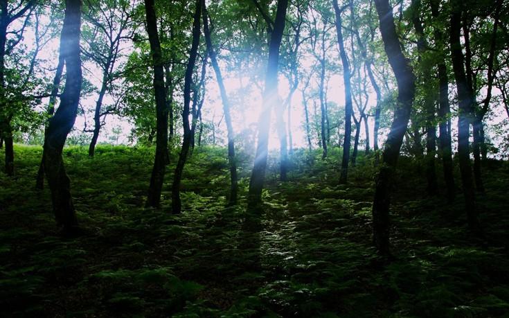 Πελοπόννησος: Το Δάσος της Φολόης