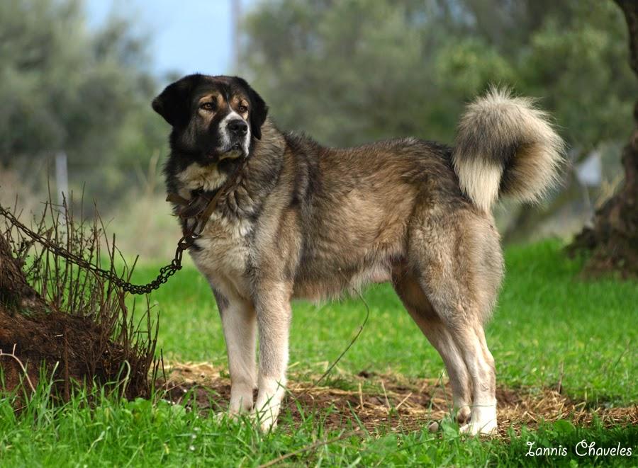 Ο άγρυπνος σκύλος (Ένα υπέροχο δίδαγμα!)