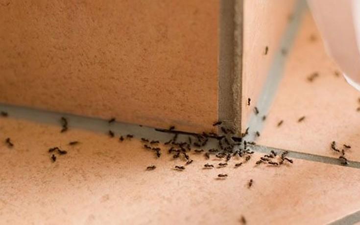 φυσικοί τρόποι για να ξεφορτωθείτε τα μυρμήγκια από το σπίτι
