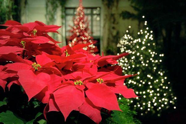Το αλεξανδρινό λουλούδι, δώρο στο Χριστό