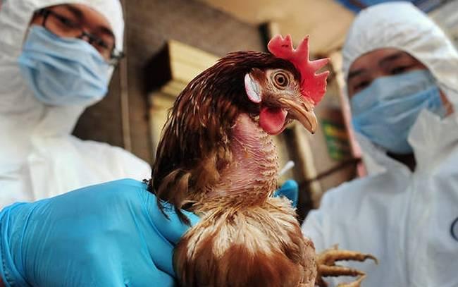 Iός της γρίπης των πτηνών εξαπλώνεται απολυτικά στην γειτονιά μας