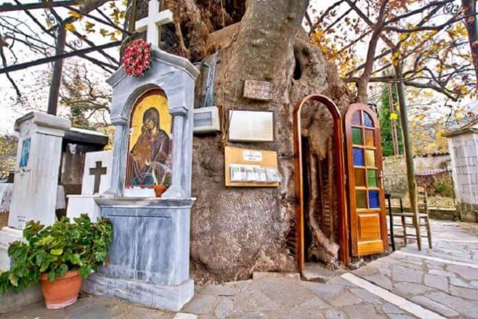 Παναγία η Πλατανιώτισσα της Αχαϊας – Το εκκλησάκι μέσα σε ένα τεράστιο πλάτανο (ΦΩΤΟΣ)