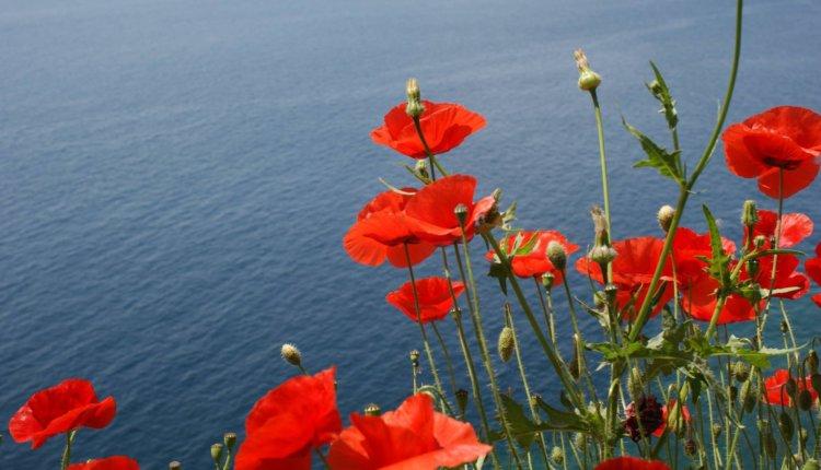 Και είναι και κάτι άλλα λουλούδια που συναντάς στο περιβόλι της ζωής , ψυχές μοναδικές,ταπεινές και υπέροχες!