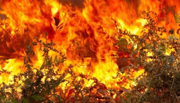 ΕΚΤΑΚΤΟ:Μαίνεται η πύρινη λαίλαπα στη Ζάκυνθο με δύο μεγάλες πυρκαγιές στα χωριά Κοιλιωμένος και Μαχαίραδο