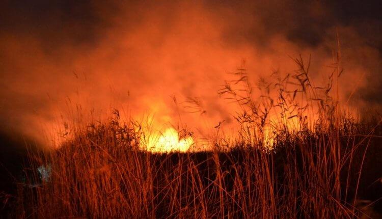 ΕΚΤΑΚΤΟ:Μεγάλη πυρκαγιά στην περιοχή Καπελέτο της Ηλείας